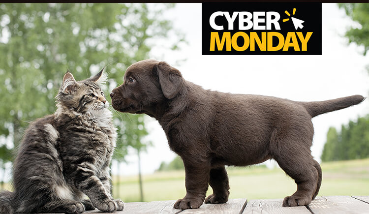 Cyber Monday Deals on Pet Supplies