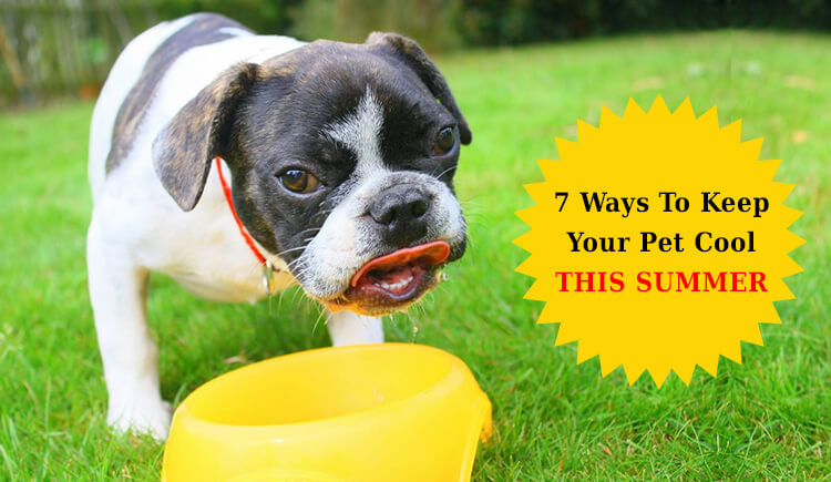 7 Ways To Keep Your Pet Cool This Summer.
