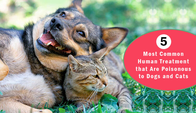5 Most Common Human Treatment that Are Poisonous to Dogs and Cats CanadaPetCare.com