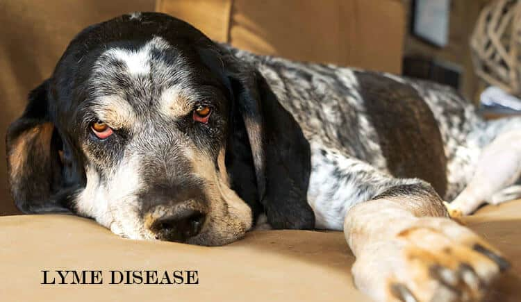 Treat Lyme Disease in Dogs