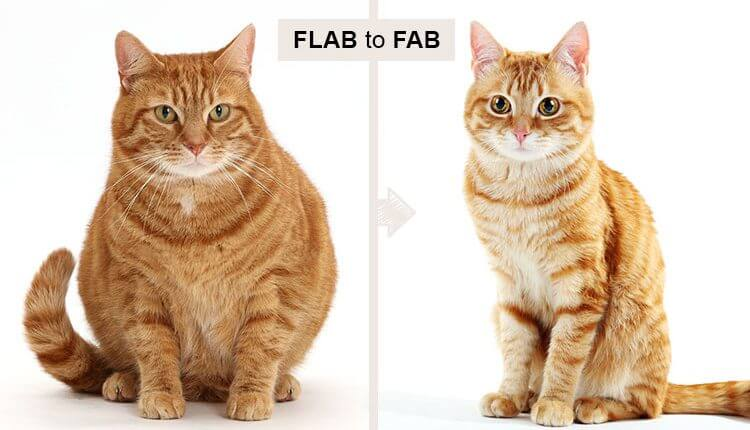 Flab-to-Fab
