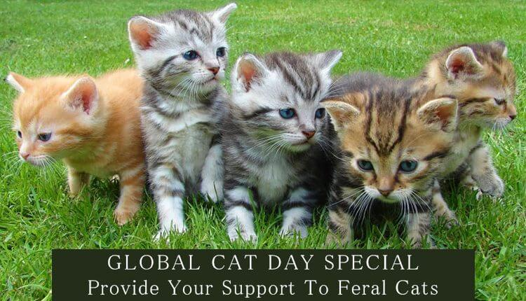 Global-Cat-Day