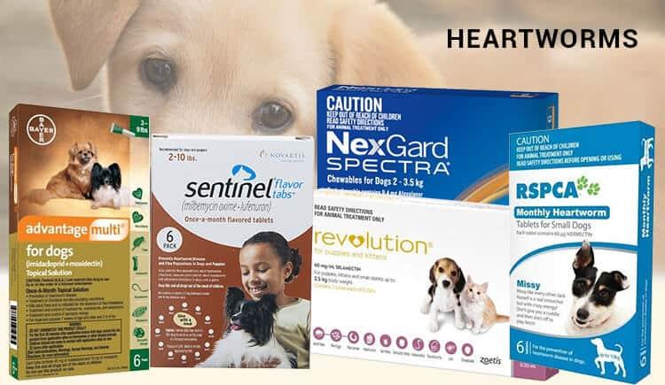 Preventatives-for-Heartworms