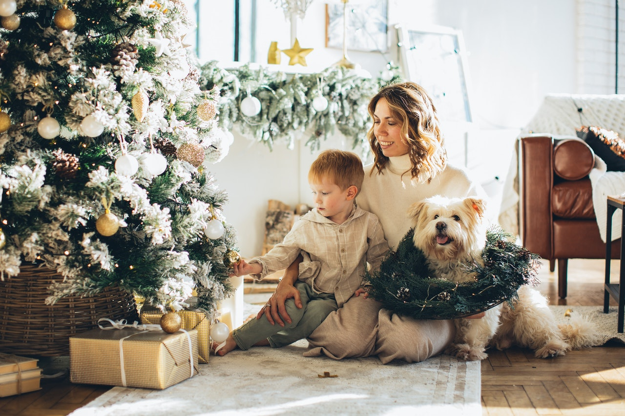 Decorate Christmas Tree With Your pet Dog
