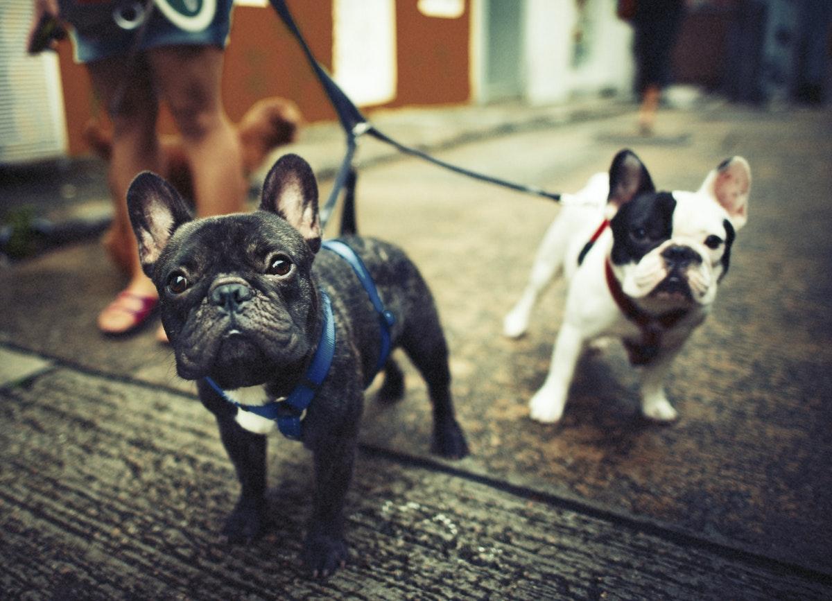 Long Walk with Pet
