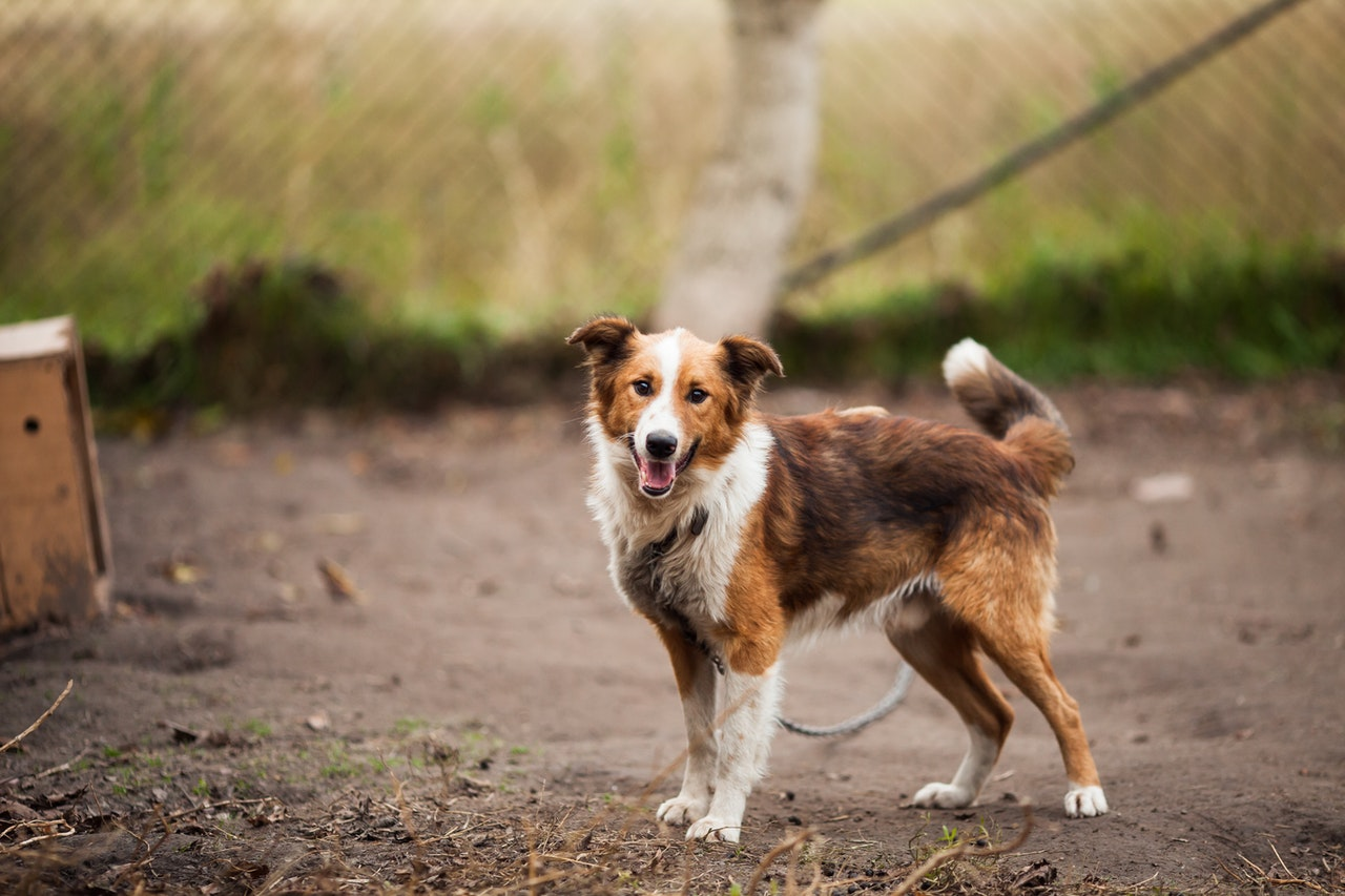 Spread Happiness By Going to Some Dog Shelter Homes