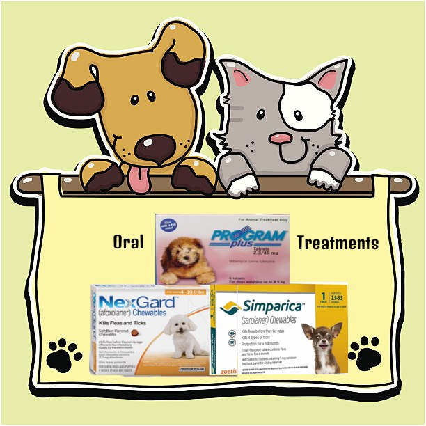 Oral Flea Treatment