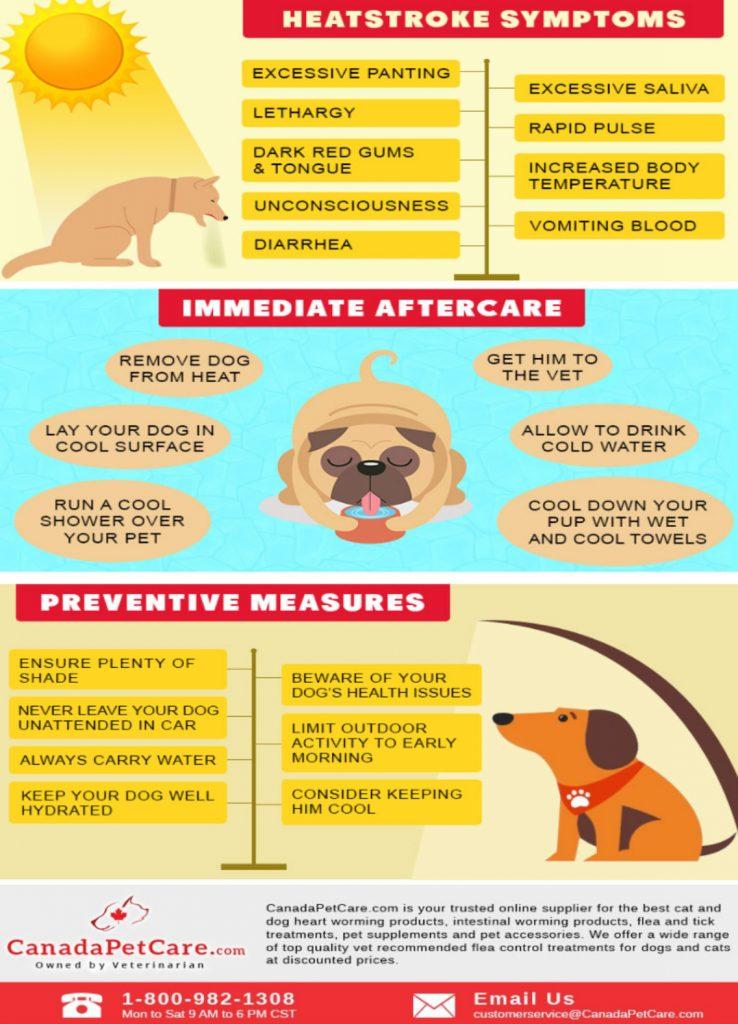 heat stroke in dog