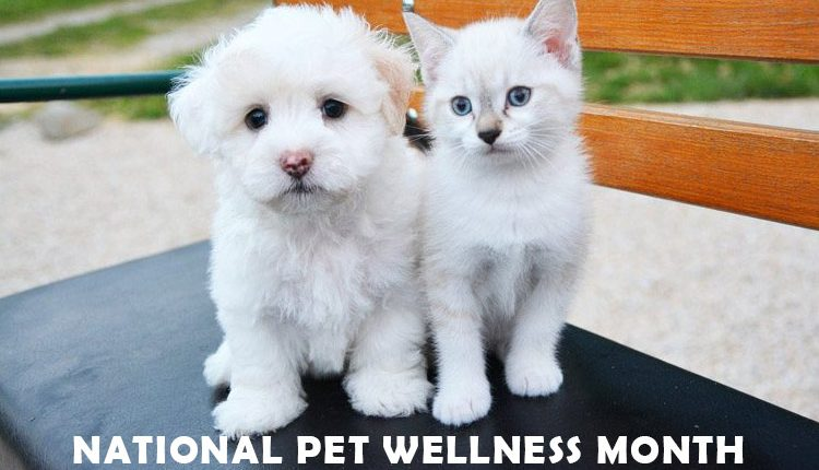National Pet Wellness Month