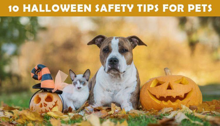 Halloween Day safty tips