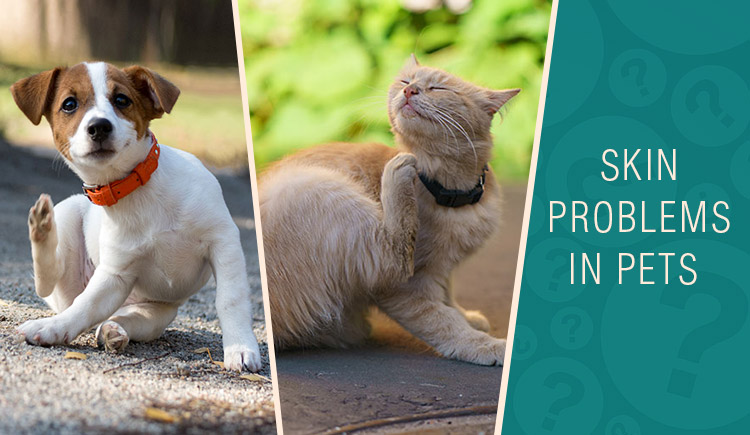 skin care treatment for pets