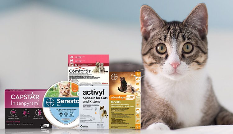 Top 5 Highly Recommended Flea Treatments For Cats