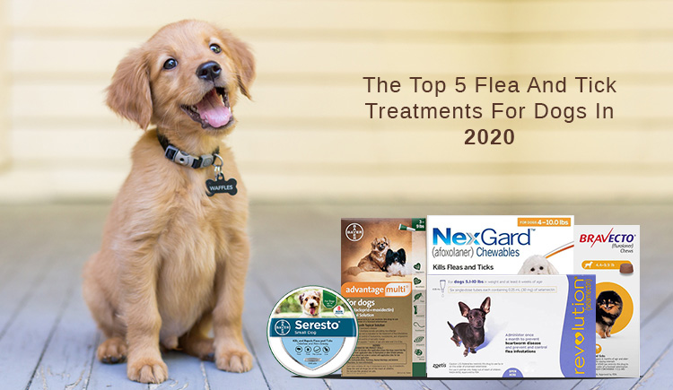 Best Flea And Tick Prevention Products in 2020
