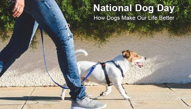 National Dog Day – How Dogs Make Our Life Better