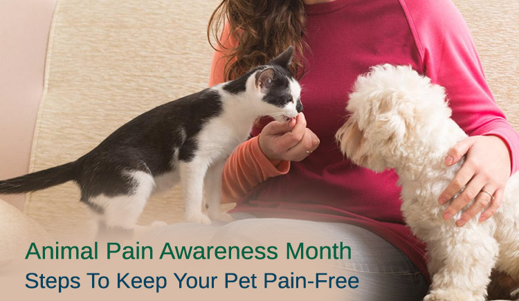 Animal Pain Awareness Month: Steps To Keep Your Pet Pain-Free