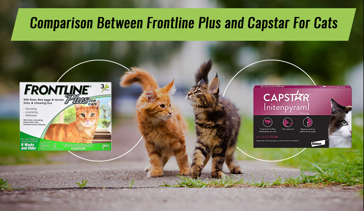 Comparison Between Frontline Plus And Capstar For Cats