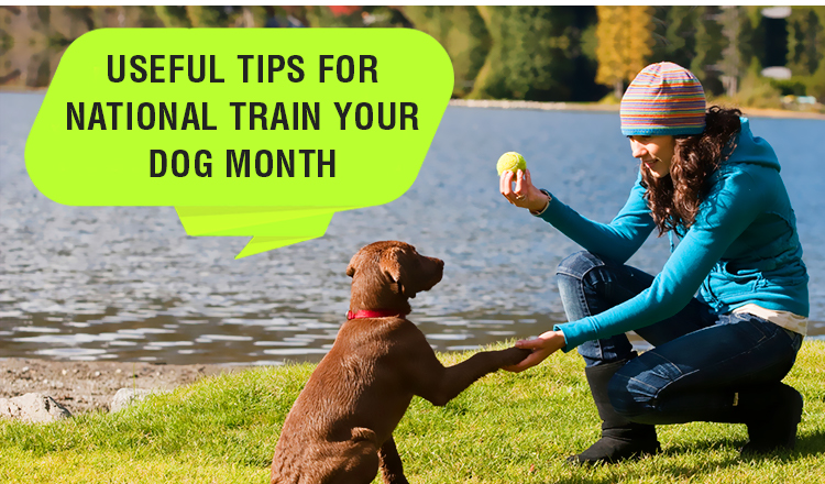 Tips For National Train Your Dog Month