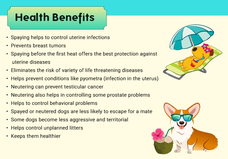 Benefits of Spaying/Neutering