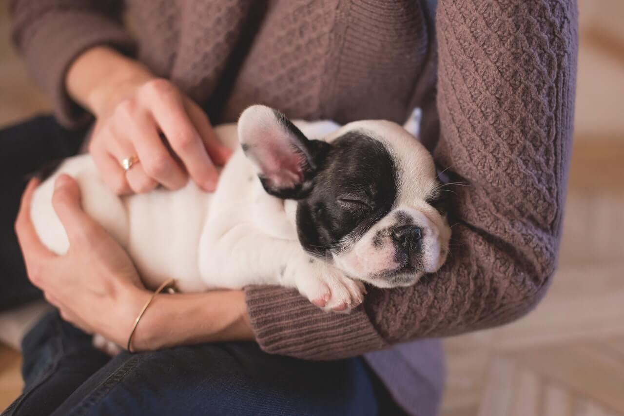 How to Take Care of Your Puppy