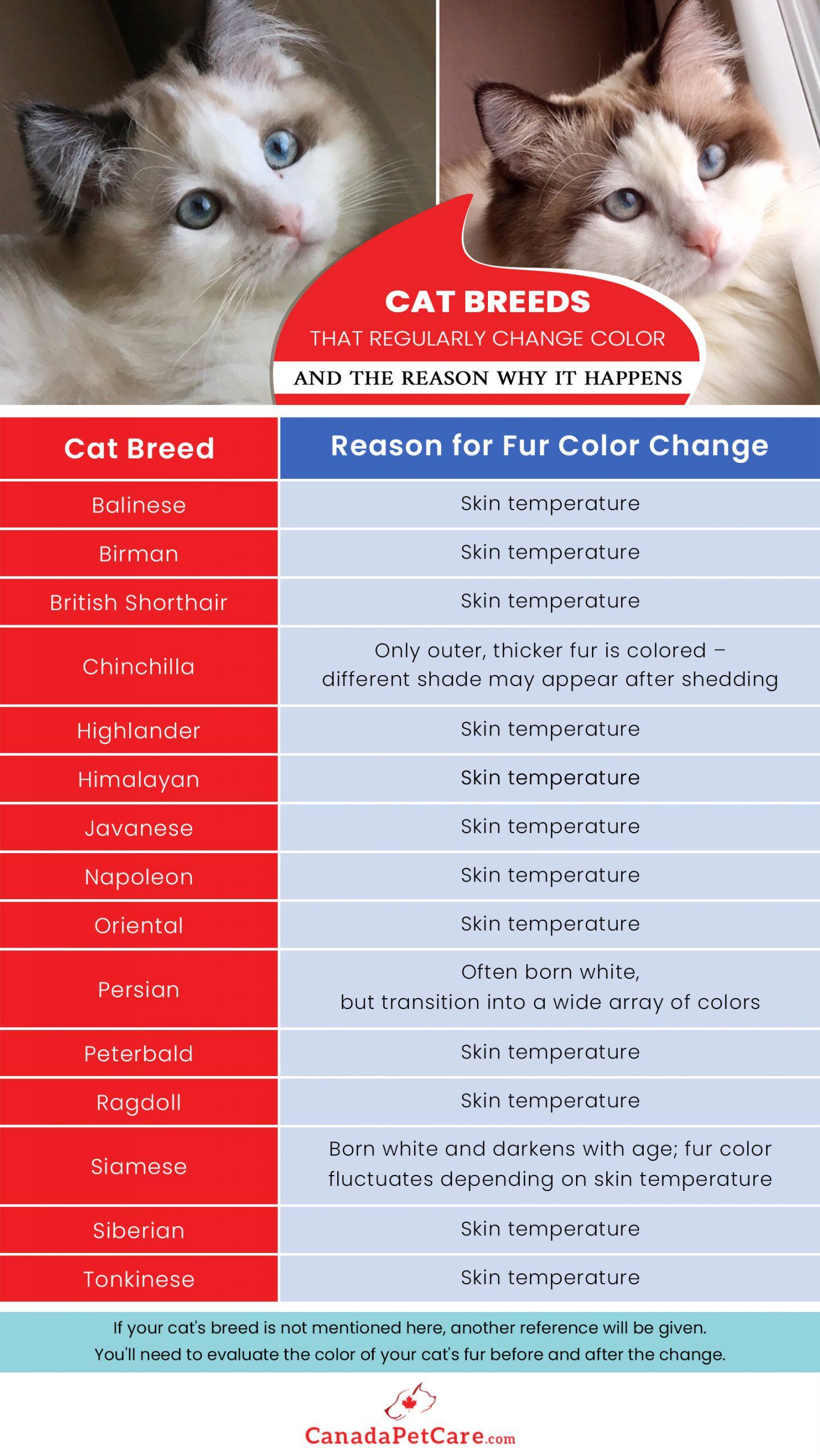 Cat Breeds Skin Temperature
