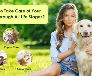 How to Take Care of Your Dogs through All Life Stages?