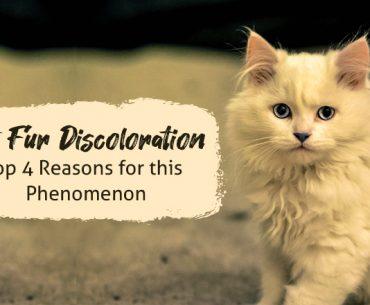 cat-fur-discoloration