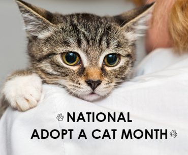 national-adopt-a-cat-month