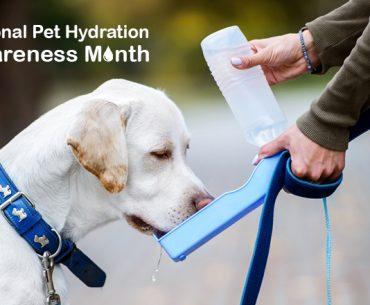 National-Pet-Hydration-Awareness-Month