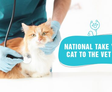 why you shouldn't put off your cat's check-up